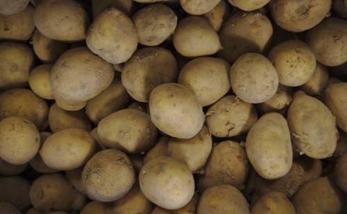 Kartoffel Princess